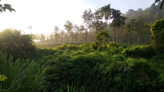 Planet Green Plantation Resort: plantation walk