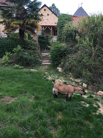 Carlux, France: Pour seule compagnie...