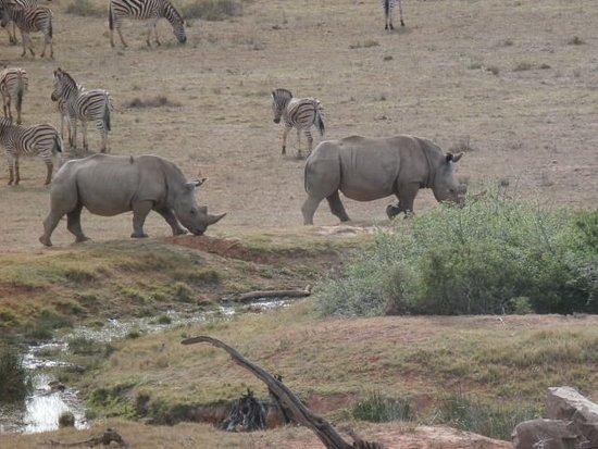 Shamwari Game Reserve Photo