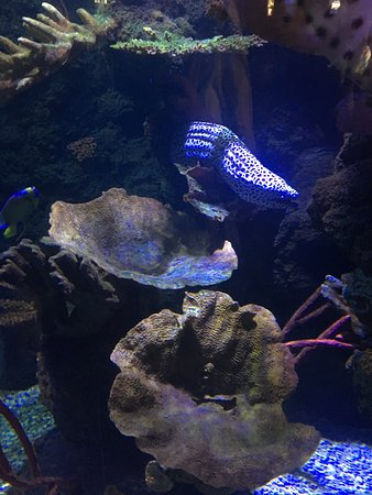 photo1.jpg - Picture of SEA LIFE Helsinki, Helsinki - TripAdvisor