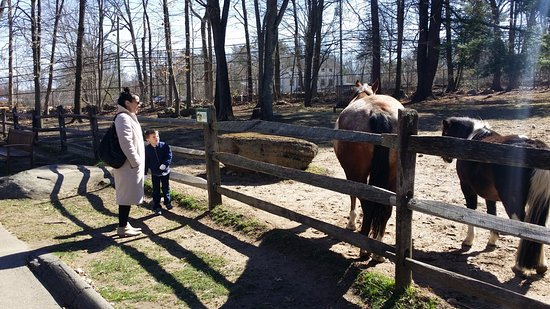 Stamford Museum & Nature Center: horses and poinies
