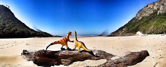 Tsitsikamma National Park, Afrique du Sud : 161020_090219-01_large.jpg