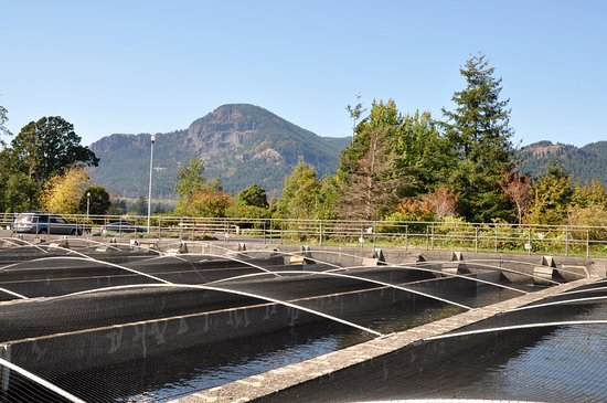 Cascade Locks, Oregón: Covered hatchery ponds