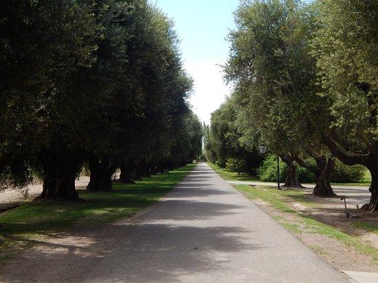 Luján de Cuyo, Argentina: Olivares en el ingreso.