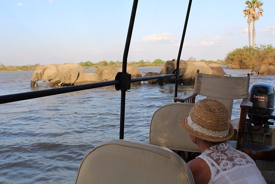 Selous Game Reserve, تنزانيا: Incredible meet and greet with the elephants