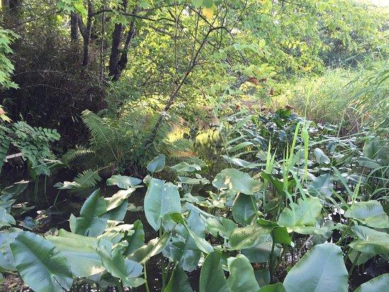 Nishiki Onuma Park: photo2.jpg