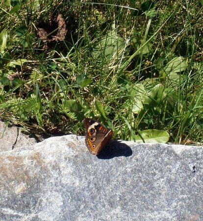 Cosby, TN: Lots of butterflies