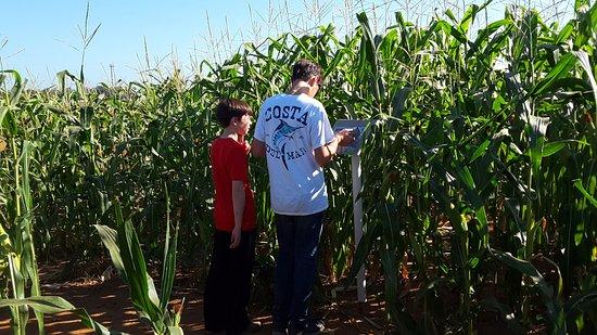 Milton, NY: Corn maze with scavenger hunt