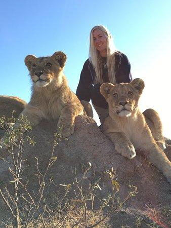 Gweru, Zimbabue: Tonga and Tamuka, lions cubs at Antelope Park
