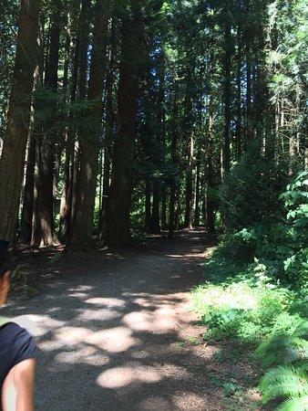 Surrey, Canada: Walk through the woods