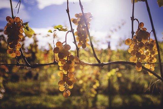 Dundee, NY: Vineyard views