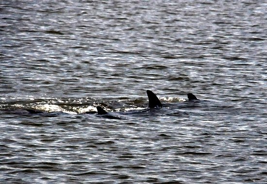 Marine Discovery Center ภาพถ่าย