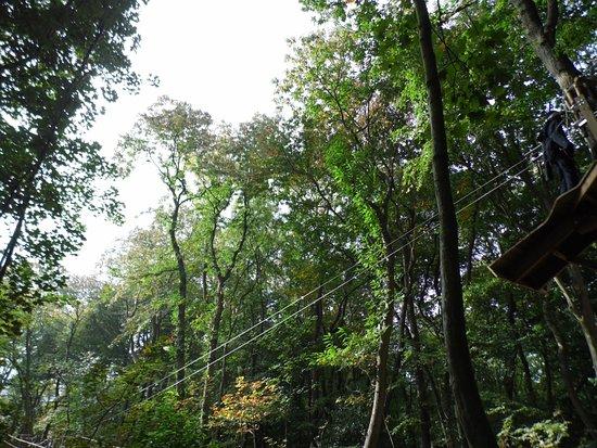 Chessington, UK: The zip wires