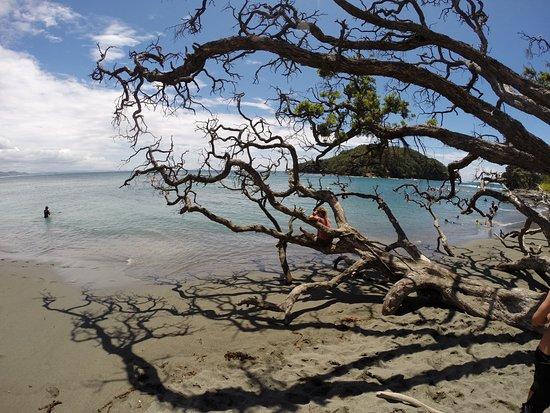 Warkworth, Nueva Zelanda: Goat Island Marine Reserve