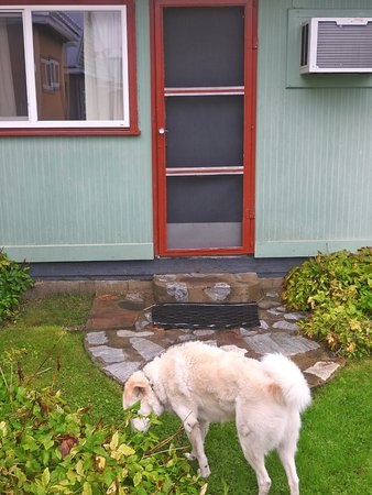 Kaslo Motel: Back door to let dog out
