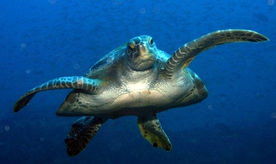 Boca Chica, ปานามา: Lots of ocean fauna