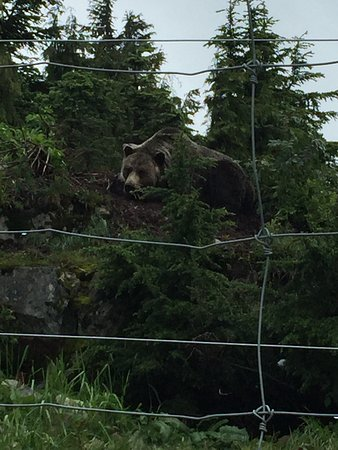 North Vancouver, Canada: Baloo the Bear