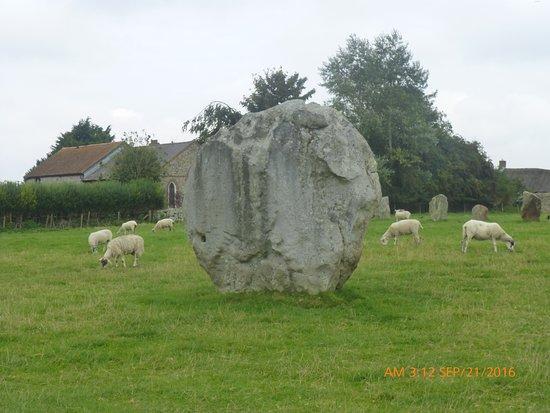 Avebury, UK: Stones right in the sheep field