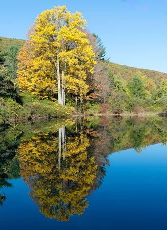 Colton Point Motel : pond reflection