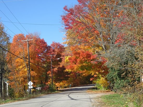 Port Carling, Canada: A routine road view of Autumn colours