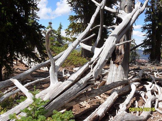 Cedar City, UT: Cedar breaks trail