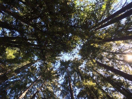 Glen Ellen, CA: Trees