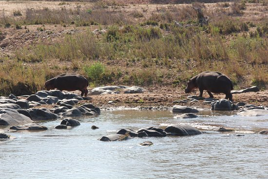 Balule Nature Reserve, Sudáfrica: hippos at Olifants river