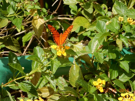Saint George Parish, Barbados: Beautiful vegetation