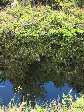 Merritt Island, FL: photo0.jpg