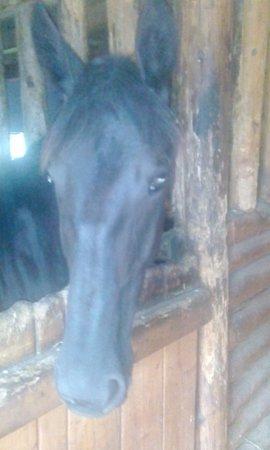Bosanski Petrovac, Bosnia and Herzegovina: friendly horse