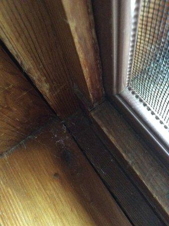 Calabogie, Kanada: Thick cobwebs