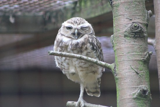 Burford, UK: Owl