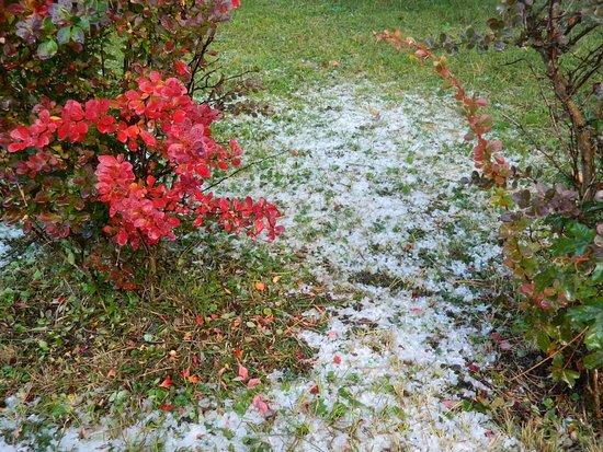 Adliswil, สวิตเซอร์แลนด์: Hielo sobre el pasto frente al hotel