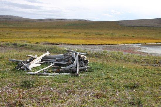 Kotzebue, AK: Driftwood duck blind