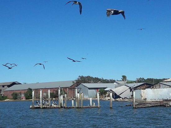 Fernandina Beach, FL: 20161022_145801_large.jpg
