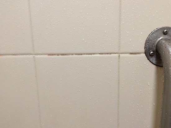 Mold In Shower Handle mold on walls in bathroom and bug bites on my friend face and arm