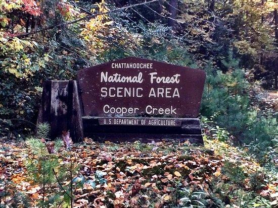 Chattahoochee National Forest: photo0.jpg