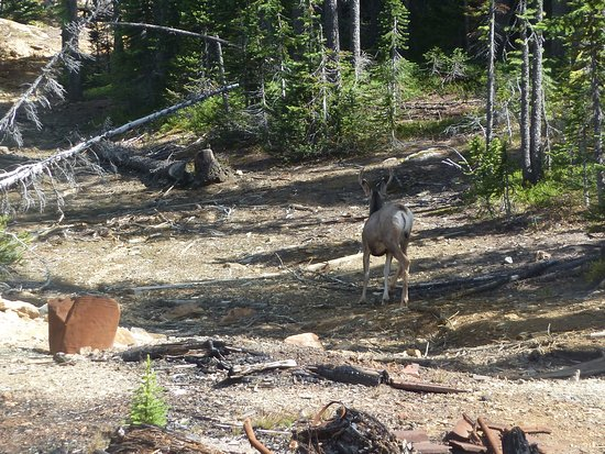 Panorama, Kanada: Spotted a deer