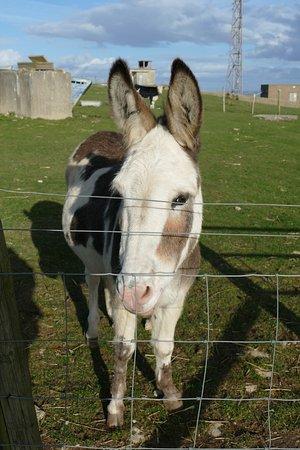 Isle of Portland, UK: Donkey at Fancy's Farm, Portland