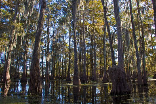 Breaux Bridge, LA: The beautiful swamp around the perimeter of Lake Martin