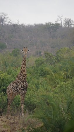 Londolozi Private Game Reserve, África do Sul: Our Greeter upon arrival to our suite. View from Patio