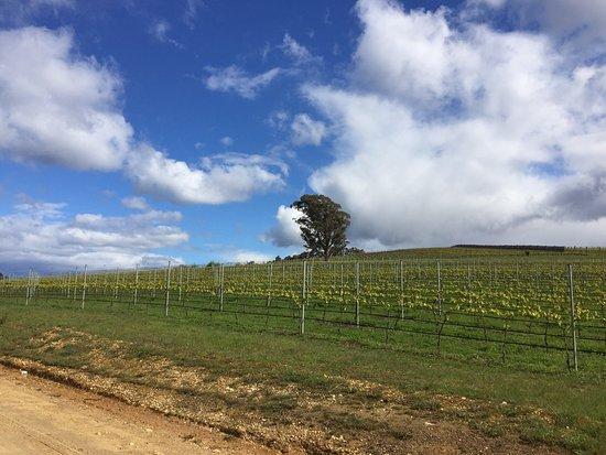 Launceston, Australien: photo2.jpg