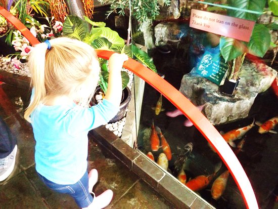 Mandarin Restaurant : My granddaughter was fascinated with the fish