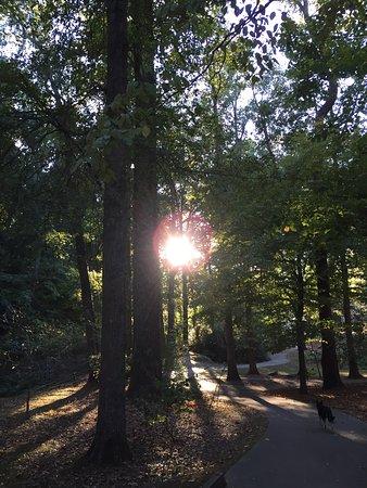 Gainesville, جورجيا: photo5.jpg