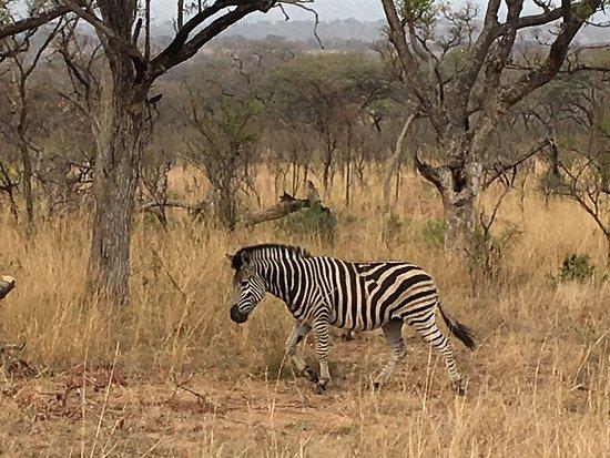 Hazyview, Νότια Αφρική: photo0.jpg