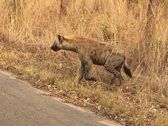 Hazyview, Νότια Αφρική: photo1.jpg