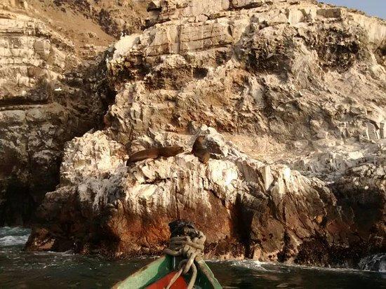 Pucusana District : leones marinos a la vista