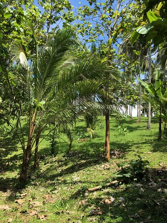 Mengwi, Indonésia: photo3.jpg