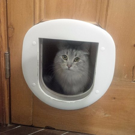 Chelsea, Канада: Another Cat hiding from 3 year olds