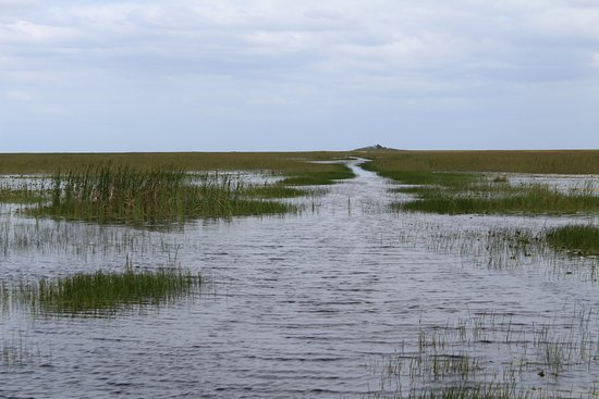 "Weston, FL: Our ""road"" through the Everglades."